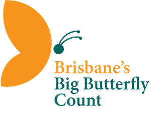 Brisbane's Big Butterfly Count